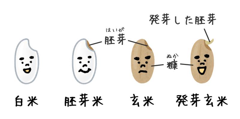 白米と胚芽米と玄米と発芽玄米のイラスト