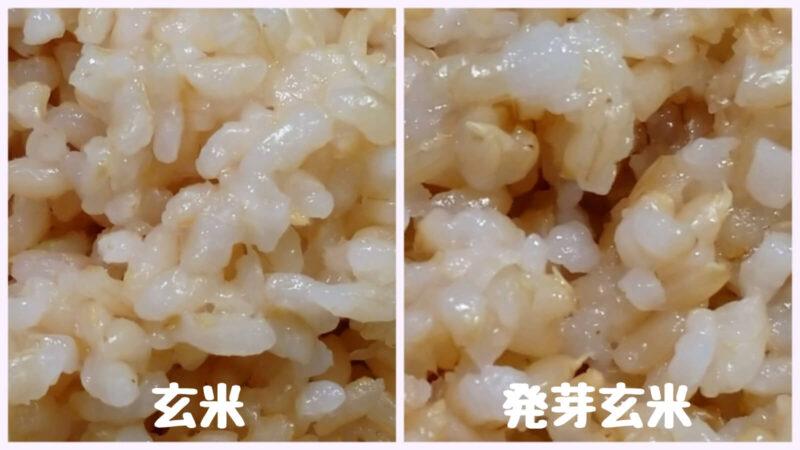 玄米と発芽玄米 見た目の違い