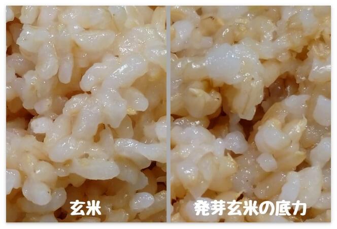 マルちゃんの「玄米」と「発芽玄米の底力」見た目の比較